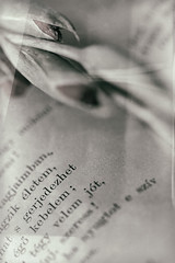 HMM! The Printed Word (suzanne~) Tags: macromondays printedword theprintedword book print page bw macro hungarian wetplate