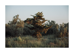 Nuvola albero (sdrusna79) Tags: landscape nuvola albero