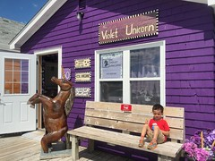 Ezra at the Violet Unicorn (brownpau) Tags: iphonex canada novascotia halifax easternpassage fishermanscove ezra ezraordo