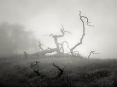Fallen (StefanB) Tags: tree fog mood hiking treescape californa henrycoe 2019 em5 1235mm statepark huntinghollow