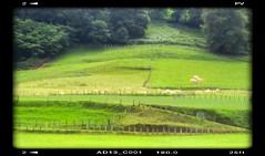 Verdure (JDAMI) Tags: pres pâtures pâturages herbe herbage vert verdure moutons vaches arbres pyrénées espagne dantxarinea dantxaria urdax lapixuri élevage piquets clôture