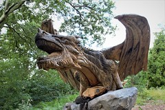 DRAGON HEAD ON (zxious) Tags: canon600d simonorourke sculpture dragon welsh brynbella tregarth a5 northwales wood oak carving chainsaw cymru draig pren outside outdoor commisioned nature natural tamron18270mmvclens