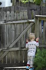 Old Gate Young Boy (elephantsinlove) Tags: gate wood fence son boy child kid peeking spying crack green plants curious milwaukee wisconsin vacation grandpa grandma grandparents grandfather grandmother crooked blonde summer june sunshine sun shine jammies burts bees snowflakes pattern