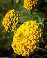 Yellow (Jim Frazier) Tags: 2019 20190801cantigny 2019cantigny august balance beautiful beauty bloom blooming blossoming blossoms blurredbackround botanic botanicgardens botanical botanicalgardens cantigny cantignypark closeup container detail diagonals donesaved dupage dupagecounty flora floral flowering flowers forbs formalgardens gardening gardens horticulture il illinois isolationofsubject lateafternoonlight loadcode201908 macro minimalism museums natural nature parks petals photowalk plants preserves publicgarden publicgardens q4 ruleofodds ruleofthirds shallowdepthoffield shallowfocus simplicity sizeover1000 study summer sunny texture three tightcrop triangles visitorcenter warmtones wheaton yellow f10
