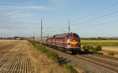 Nohab 1151 und 1138 mit DGS 89202 Zeitz - Kölleda bei Stotternheim (Emotion-Train) Tags: nohab my 1151 1138 getreidezug