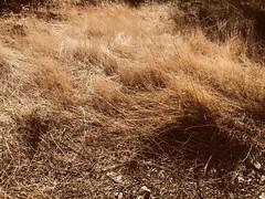 (gkc.rstk) Tags: clutter shrub yellow