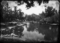 Oak Canyon Park - Wet Collodion Negative (Blurmageddon) Tags: senecaimprovedview 5x7 largeformat wetplatecollodion newguycollodion epsonv700 oakpark osaka120mmf63 newguynegativecollodion glassnegative alternativeprocess