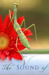Awaiting Wings (dianne_stankiewicz) Tags: insect mantis prayingmantis printedword book awaitingwings macro nature macromondays