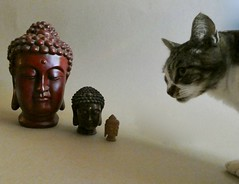 Counting Buddhas (Room With A View) Tags: wiki cat buddha buddhas odc