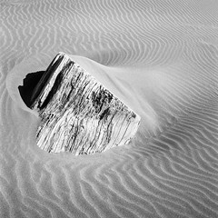 The Way the Wind Blows (Aaron Bieleck) Tags: hasselblad500cm 120film analog 6x6 square film filmisnotdead hasselblad mediumformat wlvf blackandwhite bw filmgrain oregoncoast oregon sand beach texture 60mmct fujiacros100 acros
