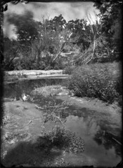 Pond - Wet Collodion Negative (Blurmageddon) Tags: senecaimprovedview 5x7 largeformat wetplatecollodion newguycollodion epsonv700 oakpark osaka120mmf63 newguynegativecollodion glassnegative alternativeprocess