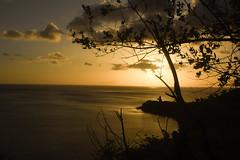 2019 Juillet - Vacances (Guadeloupe).1264 (hubert_lan562) Tags: coucher soleil guadeloupe caraibes océan ciel sun ombre arbre or gold mer nuages sky