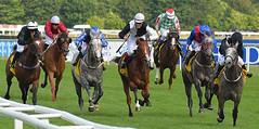 Arab horses racing (Edmund Shaw) Tags: racing horseracing arabs arabian newbury berkshire closeup