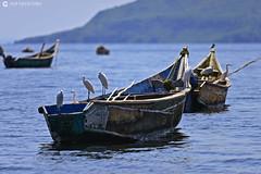 20190720 Kenia-Lago Victoria (429) R01 (Nikobo3) Tags: áfrica kenia lagovictoria animales vidasalvaje travel viajes nikon nikond610 d610 nikon300mmf4epfvr tc14eiii nikobo joségarcíacobo