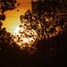 Sunset 08132019