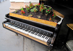 Misused (IMHILL) Tags: budapest piano fortepiano pianoforte antique broken flowers plants plantpot garden earth soil upcycle upcycled alternateuse keys ebony ivory keyboard instrument music musical