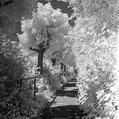 In den Hängen von Heslach (geojpix) Tags: 120 6x6 analog blackwhite film ir720 infrared infrarot light mf mediumformat rodinal rolleisuperpan200 schatten stuttgart yashicamat124g