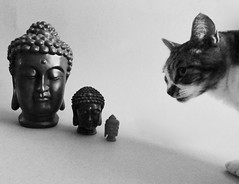 Counting Buddhas (Room With A View) Tags: wiki cat buddha buddhas odc bw