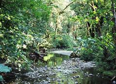 Goldstream001 (tyson_laidler) Tags: provia100f pentax 645n goldstream park vancouver island slidefilm medium format 120 stream wilderness