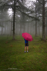 Niño en la niebla (Pruden Barquin) Tags: atmosfera basquecountry bosques basque d7100 expresion fotografia forest gorbea gorbeia nikon tokina1116 landscape luz light naturaleza nature prudenbarquin paisvasco paisajes polarizador photography saldropo verde vasco