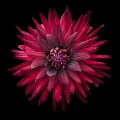 red (m_laRs_k) Tags: flower red square flora blume bloem fleur luisenpark mannheim mlarsk