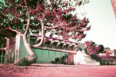 Perros-Guirec, palais des congrés (stéphanehébert) Tags: perrosguirec palais congrés bretagne cotes darmor yashica t5 christian cacaut andré mrowiec purple