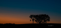 Country Sunset (Rainfire Photography) Tags: hiway35 homewardbound landscape trees silhouette bluehour nikon d850
