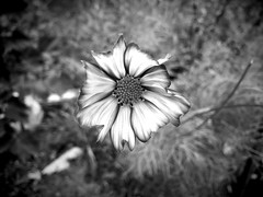 everything moves (77ahavah77) Tags: flower blossom maine