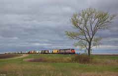 The Tree (Brian Kays) Tags: dmvw north dakota northdakota emdsd45
