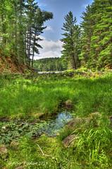 Beaver Dam Trail (Arvo Poolar) Tags: outdoors ontario canada arvopoolar nikond500 algonquinpark nature naturallight natural naturephotography beaverdamtrail hdr