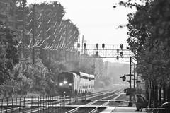 Amtrak in Black and White (tim_1522) Tags: railroad railfanning rail illinois il bnsf burlingtonnorthernsantafe bn burlingtonnorthern chicago sub subdivision racetrack amtrak passenger superliner generalelectric p42dc blackandwhite bw monochrome