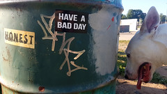Have a bad day (Coastal Elite) Tags: haveabadday dog chien skatepark perro badday stickers sticker honest trashcan garbagecan skate park outdoors tongue panting smile dogs chiens skateboarding halifax novascotia have bad day graffiti tag tags poubelle trash garbage 犬 smiling message funny canada sarcastic bullterrier bull terrier pitbullterrier pitbull doggo summer niceday haushund