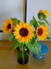 sun in a vase (Riex) Tags: tournesols sunflowers soleils vase bouquet flowers fleurs jaune yellow nature xm1 fujifilm fujinon xc1650mmf3556ois xtrans velvia