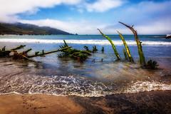(Abel AP) Tags: beach sand ocean landscape nature outdoor coast shore californiacoast andrewmolerastatepark bigsur montereycounty california usa westcoast coastline abelalcantarphotography