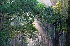 Morning in the Park (Viktorovich i am) Tags: morning nature park light forest beauty fog trees background freshness утро природа парк свет лес красота туман деревья фон свежесть