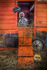 A. Eggstein (donnieking1811) Tags: tennessee cookeville 2019putnamcountyfair mastergardeners chickencoop chicken gourd cat sign straw orange hdr canon 60d lightroom photomatixpro