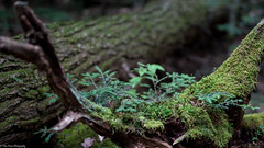 Moss covered green (Thea Prum) Tags: beedefalls waterfalls sony a7riii sigma 50mm f14
