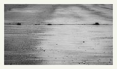 S'échapper #14 (Napafloma-Photographe) Tags: 2019 anseduconguel atlantique bandw bw bretagne fr france golfedumorbihan géographie landscape morbihan métiersetpersonnages objetselémentsettextures paysages personnes techniquephoto beach blackandwhite bouée monochrome napaflomaphotographe noiretblanc noiretblancfrance océan paysage photographe plage province quiberon