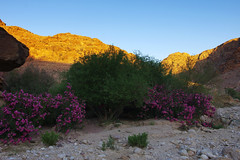 Day 2: Tranquil evening in Wadi Feid (Northern Adventures) Tags: jordan may spring middleeast desert hike hiking walk walking trek trekking track tracking backpacing wandering journey trip exploration sun sunny rock rocks mountains footpath trail adventure outdoors outdoor jordatrail danatopetra dana petra
