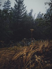 Hilltop mood. (thnewblack) Tags: huaweip30pro smartphone cameraphone leicaoptics britishcolumbia squamish britanniabeach gloomy moody vsco darkedit lionsbay foggy outdoors nature inexplore