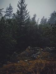 Exposed rock. (thnewblack) Tags: huaweip30pro smartphone cameraphone outdoors nature vsco gloomy moody foggy lionsbay britanniabeach britishcolumbia squamish darkedit leicaoptics inexplore