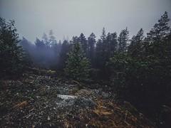 Damp. (thnewblack) Tags: huaweip30pro outdoors nature smartphone cameraphone vsco britishcolumbia britanniabeach lionsbay squamish gloomy moody leicaoptics darkedit wideangle inexplore