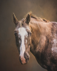 Snowy (danniearmstrong) Tags: equine horse texture brown