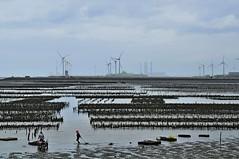 Oyster farm (mattlaiphotos) Tags: oyster oysterfarm beach ocean seashore fisherman wind turbine seafood silhouette contour