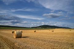 Les blés sont coupés (Excalibur67) Tags: nikon d750 sigma globalvision art 24105f4dgoshsma paysage landscape ciel cloud sky nuages moissons rundball balledepaille campagne champ vosgesdunord alsace