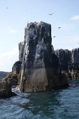 Staple Island (Mackay) Tags: farne james sea