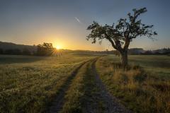 Sunrise at Güttingen (Sebo23) Tags: sunrise sonnenaufgang sun sonne sunstar sonnenstrahlen sonnenstern gegenlicht light lichtstimmung lichtschatten naturaufnahme natur nature landschaftsaufnahme landschaft landscape landscapephotography canoneosr canon16354l