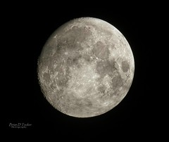 24 hours later (Brian D. Tucker) Tags: riverwood d500 waxinggibbousmoon riverwoodnights nikkor200500mm 500mm almostfull moon moonlight