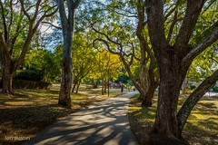 RIVERSIDE PARK (len.austin) Tags: afternoon australia brisbane landscape outdoor pathway shadows subtropics winter