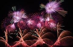 Fireworks in Nagaoka (7) (takashi muramatsu) Tags: fireworks nagaoka japan nikon d810 長岡花火